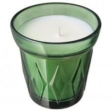 شمعة معطرة في كأس زعتر, أخضر غامق